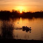 Swan Couple at Sunset by EdPettitt