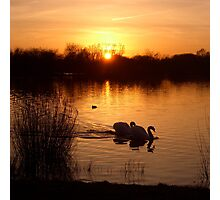 Swan Couple at Sunset Photographic Print