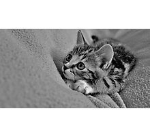 Little MillieMac..... Hunter Photographic Print