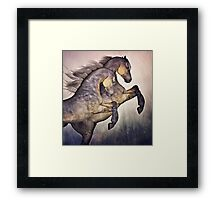 Two Stallions Framed Print