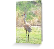 Backyard Beauty ~ Greeting Card
