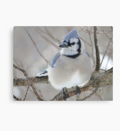 Blues and Grays Canvas Print