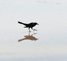 Bird on the beach by apalmiter