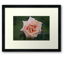 Winter bloom, tough against the wind Framed Print