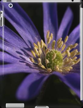 Blue Flower close up by Pawel J