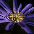 Blue Flower close up by PMJCards