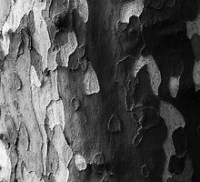 Black, White and Grey by James Farnan
