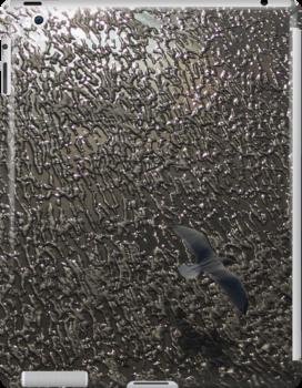 Seabird above the beach by Pawel J