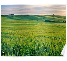 Val d'Orcia, Italy Poster