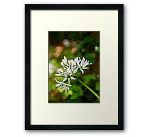 Woodland Bloom Framed Print