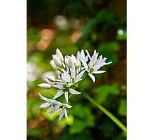 Woodland Bloom Photographic Print
