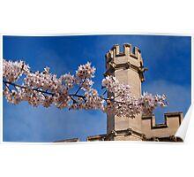 Myriad of Blossom Poster