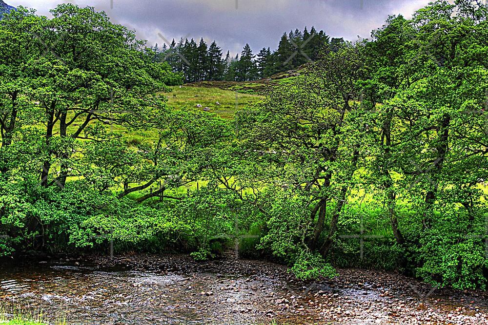 River in the Glen by Tom Gomez