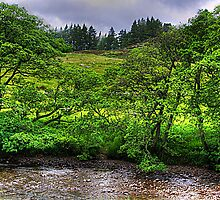 River in the Glen by Tom Gomez