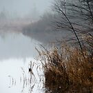 Early Morning on the Pond by PhotoKismet