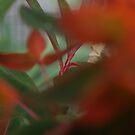 Plant Close up by Pawel J
