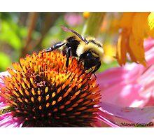 Bee at work III Photographic Print