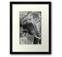 Hiding in the bushes Framed Print