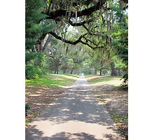 Live Oak Alley Photographic Print