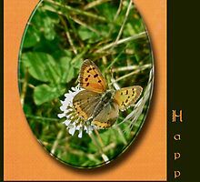 Birthday Greeting Card - American Copper Butterfly by MotherNature2