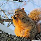 We Take the Nut Very Seriously by Greg Belfrage