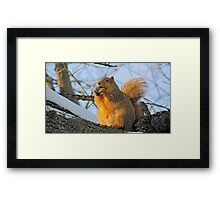 We Take the Nut Very Seriously Framed Print
