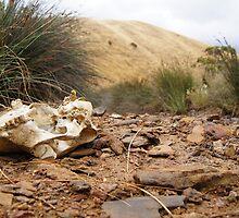 Cow Bone Creek Bed, Kangaroo Island by Henry Inglis