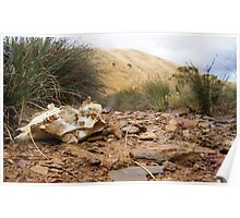 Cow Bone Creek Bed, Kangaroo Island Poster