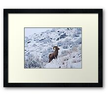 Winter Ram Framed Print