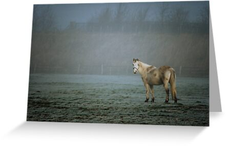 Horse at Willow Farm nr Canterbury 198402140003 by Fred Mitchell