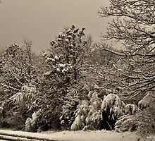 Southern Illinois Winter Scene 4_ Dec 2012 by michaelasamples