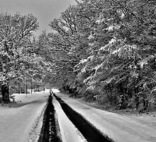 Southern Illinois Winter Scene 7_ Dec 2012 by michaelasamples