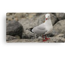 On the rocks,waiting. Canvas Print