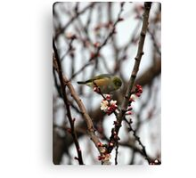 Sitting in the Blossom Canvas Print