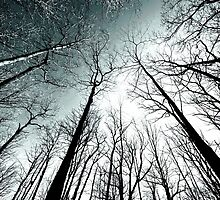 winter woods.. by JOSEPHMAZZUCCO