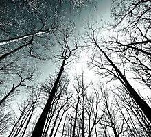 winter woods.. by JOSEPHMAZZUCCO