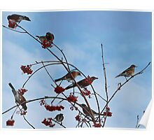 Robins in the Winter Poster