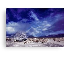 Palomino Valley North winter Canvas Print