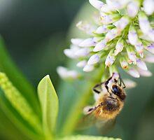 Bumbling Bee by Josie Eldred