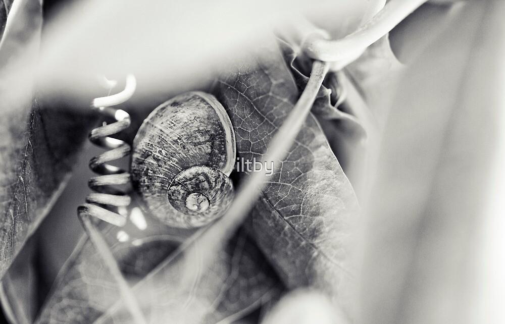 Swirls and Curls by Josie Eldred