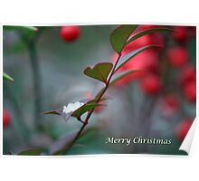 Berry Merry Christmas Poster