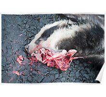 Dead Badger Poster