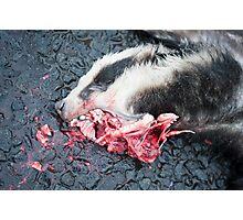 Dead Badger Photographic Print