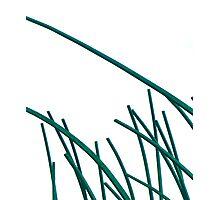 Green Blades Photographic Print