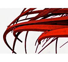 Blooded Blades Photographic Print