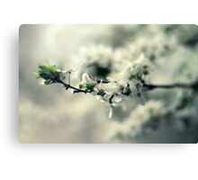 Spring Flower Branch Photography Canvas Print