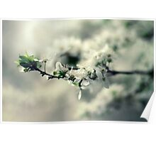 Spring Flower Branch Photography Poster