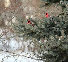 Ornaments by WalnutHill