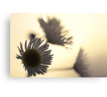 Flower Silhouette Sunset Canvas Print