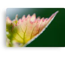 Macro Photography Leaf Canvas Print